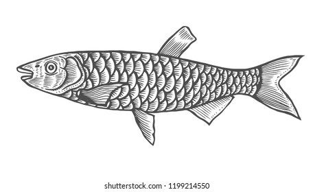 Ink sketch of fish. Hand drawn vector illustration on white background. Retro style.