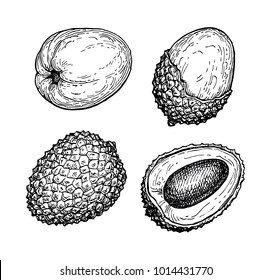 Ink sketch of lychee fruits. Isolated on white background. Hand drawn vector illustration. Retro style collection.