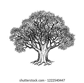 Ink sketch of oak without leaves. Winter tree. Hand drawn vector illustration isolated on white background. Retro style.