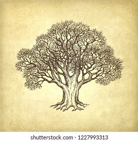 Ink sketch of oak without leaves. Winter tree. Hand drawn vector illustration on old paper background. Retro style.