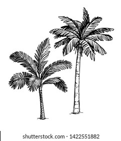 Ink sketch of palm trees. Isolated on white background. Hand drawn vector illustration. Retro style.