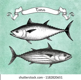 Ink sketch of Skipjack and Atlantic bluefin tuna. Hand drawn vector illustration of fish on old paper background. Retro style.