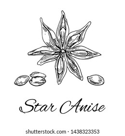 Ink Star Anise hand drawn sketch. Retro botanical line art. Medical herb and spice. Vintage Badyan flower and seeds. Herbal vector illustration isolated on white background