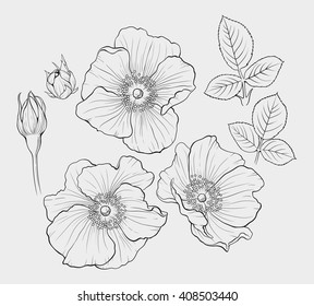 ink vector illustration of a  beautiful eglantine flowers set