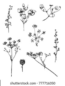 Ink vector sketches of plants parts: seeds, buds, inflorescences