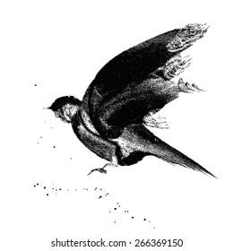 Ink-drawn flying bird