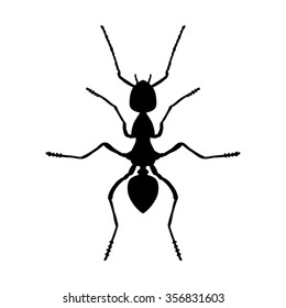 Insect anatomy. Silhouette Formica exsecta. Sketch of ant. Ant . hand-drawn silhouette ant. Vector illustration
