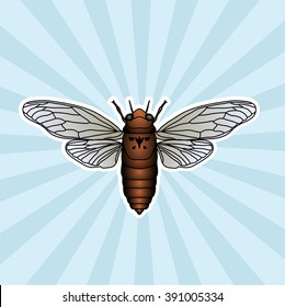 Insect anatomy. Sticker cicada. Cicadidae. Chremistica umbrosa. Sketch of cicada.  cicada hand-drawn cicada. Vector illustration