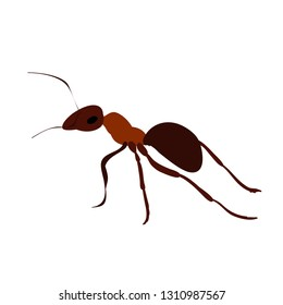 insect ant brown
