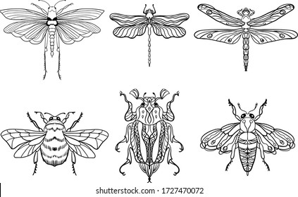 Insect bees, dragonflies, beetles, moths. Set. Vintage hand drawn engraving vector collection. Black-white on a white background. Ideal for postcards or for any other design, coloring.