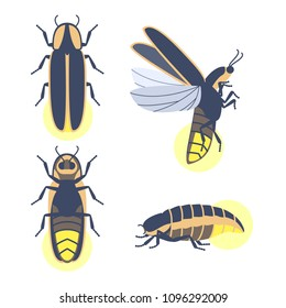 Insect beetle firefly. Vector set of four simple flat drawings with different angles. Males and female.