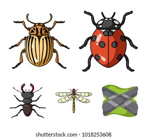 Insect, bug, beetle, paw .Insects set collection icons in cartoon style vector symbol stock illustration web.