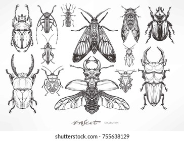 Insect collection. Hand drawn antique beetle set. Vector illustration. Decorative graphic  Art Nouveau style.Engraving romantic. Element for print, design tattoo art, adult coloring page.