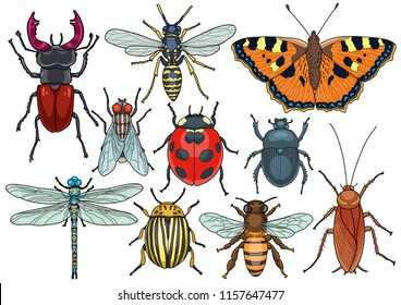 Insect collection, illustration, doodle, cartoon, drawing, ink, line art, vector