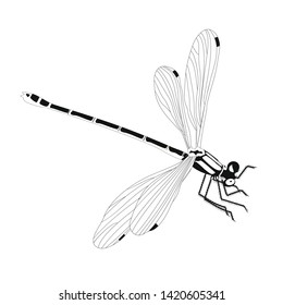 Insect dragonfly flying decor isolated