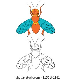insect fly, coloring book