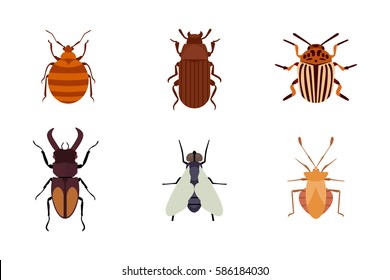 Insect icon flat isolated nature flying bugs beetle ant and wildlife spider grasshopper or mosquito cockroach animal biology graphic vector illustration.