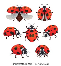 Insect ladybird set, cute small red bugs. Natural beauty design. Vector flat style cartoon ladybug illustration isolated on white background