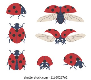 Insect ladybug. Set of seven vector beetles of different angles on a transparent background.