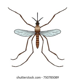 Insect. a realistic mosquito. Culex pipiens Mosquito silhouette. Mosquito isolated on white background.  Vector illustration