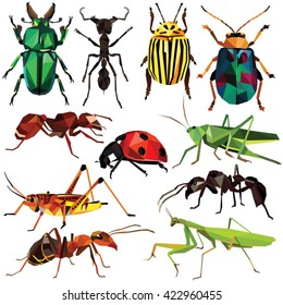 Insect set colorful low poly bug, beetle and ant designs isolated on white background. Vector insects illustration.