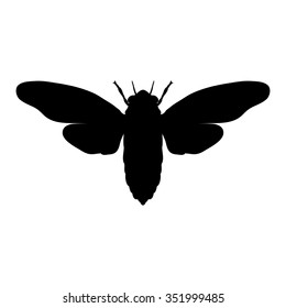 Insect silhouette.. cicada. Cicadidae. Sketch of cicada. cicada isolated on white background. cicada hand-drawn cicada. Vector illustration
