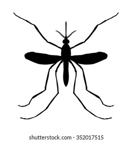 Insect silhouette. Insect. a realistic mosquito. Culex pipiens Mosquito silhouette. Mosquito isolated on white background. . hand-drawn mosquito. Vector illustration