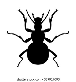 Insect silhouette. Sticker ground beetle bug. Carabidae coleoptera. Vector illustration