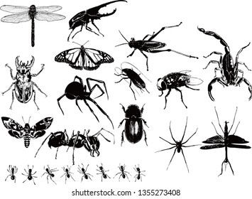 Insect silhouette vector