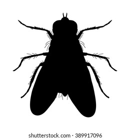 Insect silhouette.fly. Musca domestica.. Insect.  fly silhouette Vector illustration