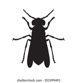 Insect silhouette.Wasp. Sketch of Wasp. Wasp isolated on white background.  hand-drawn Wasp. Vector illustration