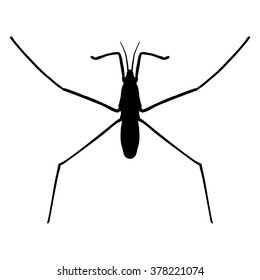 insect silhouette..water strider. Gerridae. GERRIS LACUSTRIS Sketch of water stride. hand-drawn water strider. Vector illustration