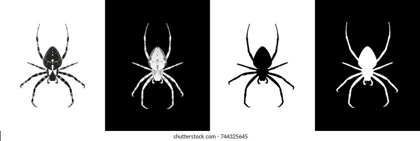 Insect spider hanging upside down with a different paw position. Two options are white on black and two are black on white. Vector illustration