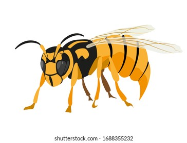 Insect Wasp, close-up, side view. Vector image isolated on a white background.