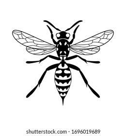 Insect wasp icon. Vector design. Black wasp vector illustration on a white background.