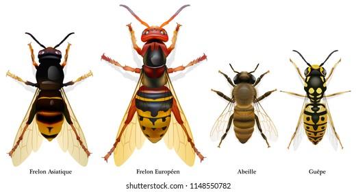 insecte, abeille, frelon, guêpe, vue du dessus, vecteur