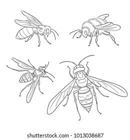 Insects: bee, wasp, bumblebee, hornet - in contours. Vector illustration. EPS8