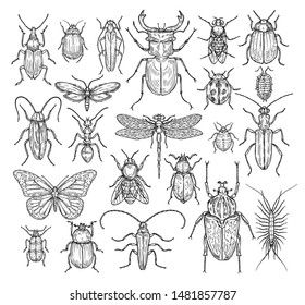 Insects hand drawn. Butterfly, beetle and fly, ant. Dragonfly, ladybug and bee, lice and cockroach. Retro sketch engraving vector set