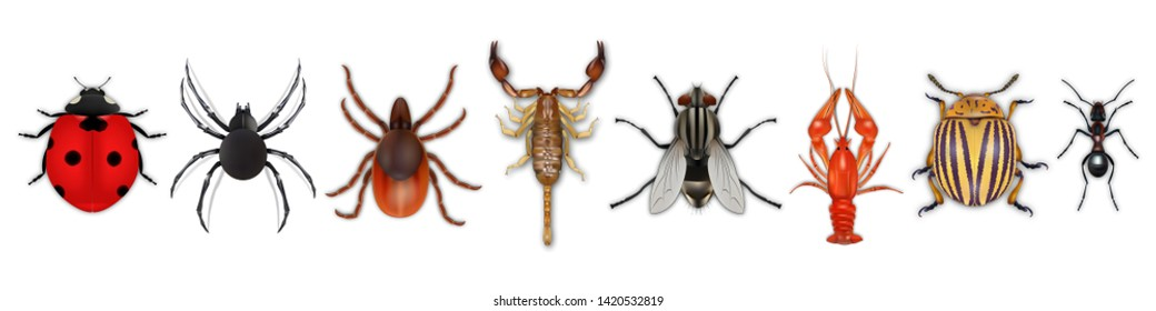 Insects realistic icons set with colorado potato beetle, ladybug, fly, scorpion, cancer, spider, tick, ant isolated on white background. Vector illustration eps10
