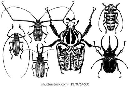 Insects set. Beetles isolated on white background. Goliath, Harlequin, rhinoceros beetle and others. Top view. Black and white sketch. Realistic drawing of bugs. Vector illustration.