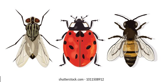 Insects Set. House fly, Ladybug and Bee. Vector.