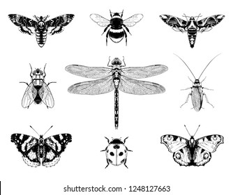 Insects set vector hand drawn illustrations.  Death's-head moth, Bumblebee, Oleander hawk-moth, Fly, Emperor dragonfly (Anax imperator), Cockroach, Red admiral, Ladybug, Aglais io (European peacock).