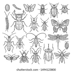 Insects sketch. Butterfly, beetle and fly, ant. Dragonfly, ladybug and bee. Vintage hand drawn engraving vector collection