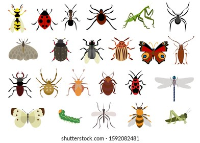 Insects vector set. Butterfly, bee ants illustration.