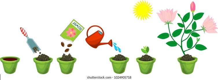 Instructions on how to plant flower in six easy steps. Step by step