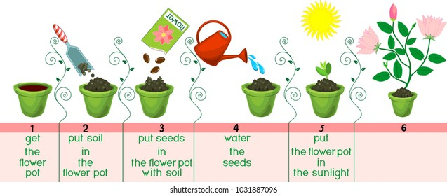 Instructions on how to plant flower in sequence of easy steps