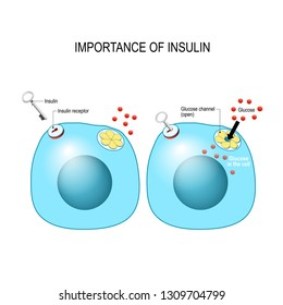 insulin acts as the key which unlocks the cell to allow glucose to enter the cell and be used for energy. Insulin is a hormone secreted by the pancreas in response to elevated blood levels of glucose