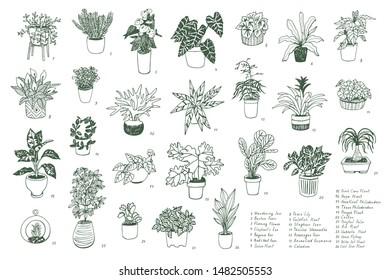 Interior home indoor plants hand drawn vector illustrations set