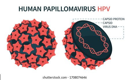 Internal and external structure of human papillomavirus HPV. An enlarged schematic representation. Vector illustration.