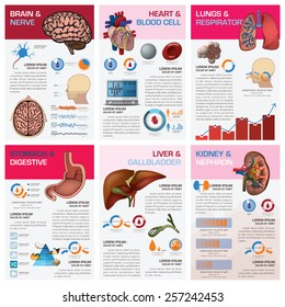 Internal Human Organ Health And Medical Chart Diagram Infographic Design Template